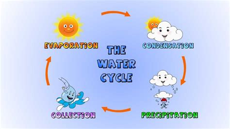 water cycle  rain  formed lesson  kids youtube