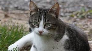 Odeur Urine Chat : le truc puissant pour liminer l 39 odeur d 39 urine de chat la maison ~ Maxctalentgroup.com Avis de Voitures