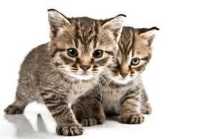 cat pics conquering cat allergy discovermagazine