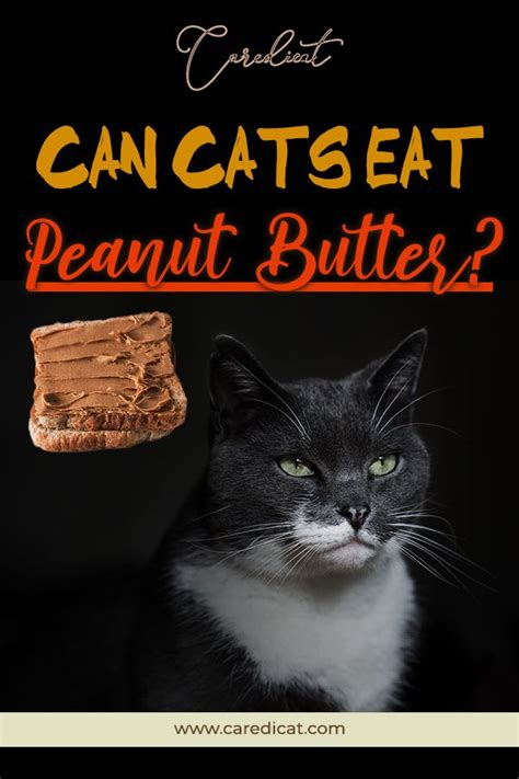 can cats eat margarine