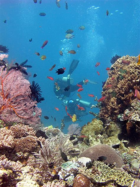 Dive In Lombok by Gili Islands Diving Diving From Gili Air Winter Diving