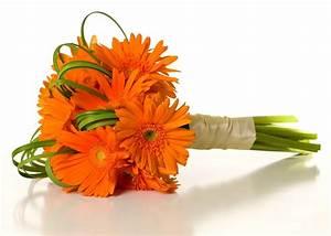 Orange Carnation Bouquet   Orange Gerbera Daisies ...