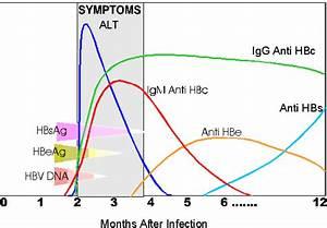 What' are t... Hepatitis B Surface Antibody