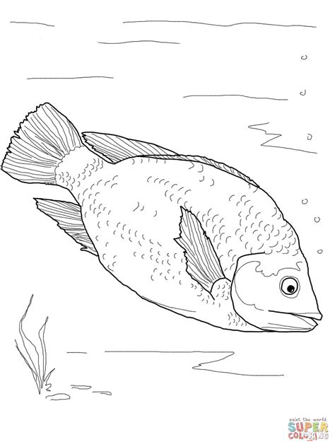 red tilapia coloring page  printable coloring pages