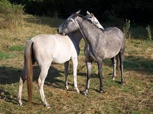 Bilder Von Pferden : hauspferd ~ Frokenaadalensverden.com Haus und Dekorationen