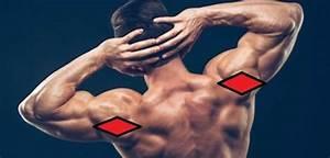 Posterior Deltoid  Functional Anatomy Guide  U2022 Bodybuilding Wizard