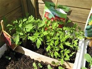 Quand Semer Les Tomates : r ussir le repiquage tous nos conseils ~ Melissatoandfro.com Idées de Décoration