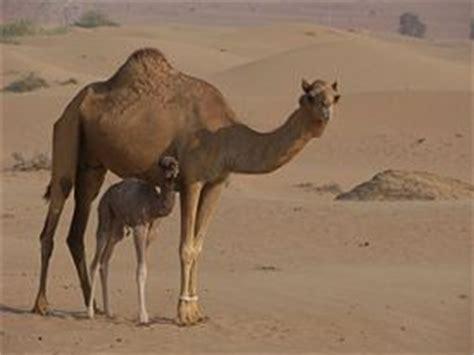 Arabian Desert  New World Encyclopedia