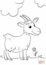 Goat Coloring Cartoon Pages Drawing Printable Goats Animals Preschool sketch template