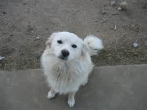 alaskan dog breeds dog breeds picture