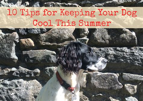 will a heat l keep a dog warm me and my shadow how to keep your dog cool this summer