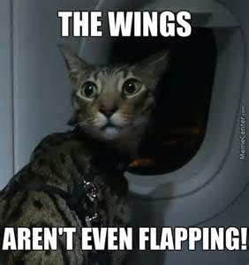 cat on a plane omg cat memes best collection of omg cat pictures