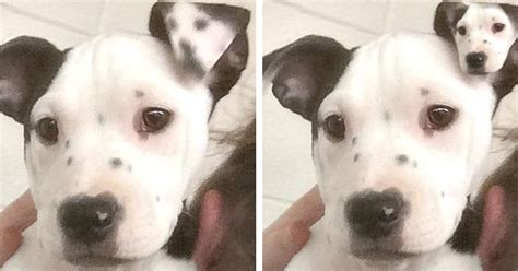 Adorable Rescue Puppy Has Dog Selfie On Her Ear