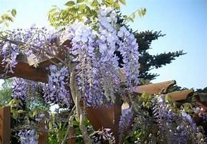 Kletterpflanzen Immergrün Winterhart : clematis oder gei blatt hoch hinaus mit einer ~ Michelbontemps.com Haus und Dekorationen