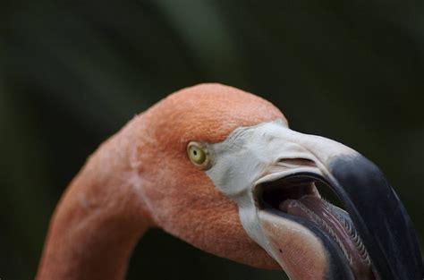 let s talk about bird tongues tough little birds