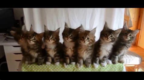 versuche nicht zu lachen lustige katzen youtube