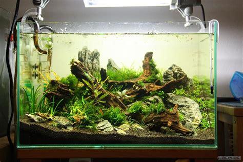 nano aquarium aquascaping google zoeken aquarium