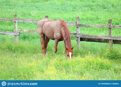 meadow grazing dusty horse coat