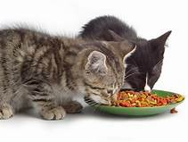 Imágenes de gatos. Th?id=OIP