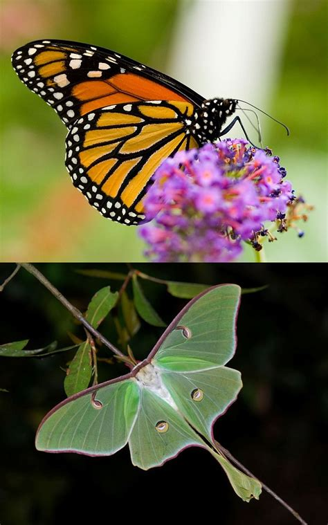 4 pics 1 word 7 letters butterfly new 4 pics 1 word 7 letters butterfly how to format a