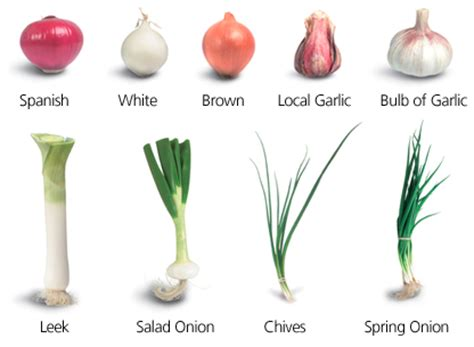 types of onions health benefits of onion