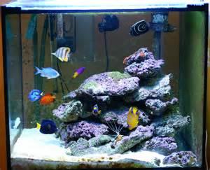 aquarium eau de mer fish only forum r 233 cifal finist 233 rien afficher le sujet fish only avec pierres vivantes