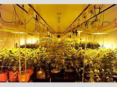 Cannabist Q&A Grow room tours, penny stocks, strain hunting