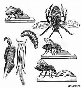 Parts Of An Insect Diagram