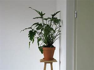 Plant pietmondriaancom for Live plant grows through walls by ruben bellinkx