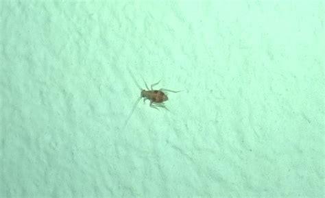 kleine insekten im schlafzimmer ca  mm gross