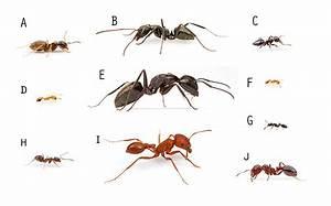 Tuesday Night Mystery: Test the Pest Chart – MYRMECOS