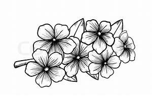 Branch of a blossoming tree in graphic black white style