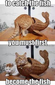 Fish Funny Animals Memes