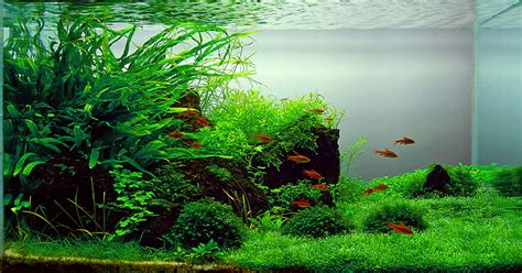 room temperature aquarium fish fishstoresnearme fish care
