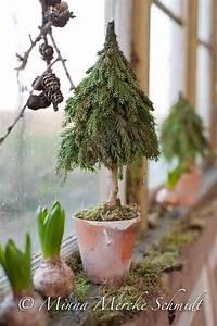 Tannenbaum Im Topf : tannenbaum im topf weihnachten pinterest ~ Frokenaadalensverden.com Haus und Dekorationen