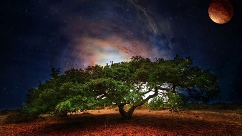 Tree, Mobile Dark Backgrounds Sky, High Resolution, Stars