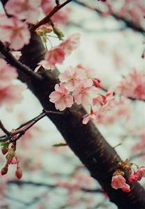 photography film beautiful hipster vintage indie flowers ...