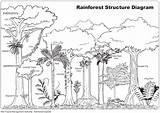 Rainforest Tropical Drawing Animals Ecosystem Forest Coloring Jungle Habitat Trees Activities sketch template