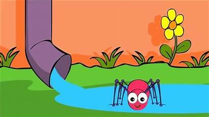 Spider Bitsy Itsy Incy Wincy Nursery Rhyme