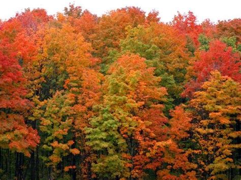 michigan ranks    fall color photography