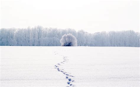Nature Landscape Winter Snow Cool White Traces Tree Tree