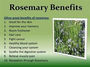 Rosemary leaves Meaning in urdu اکلیل کوہستانی   Akleel ...