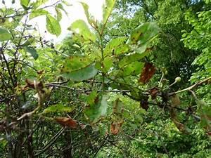 Schädlinge Am Kirschbaum : kirschbaum krankheiten der gartenratgeber ~ Lizthompson.info Haus und Dekorationen