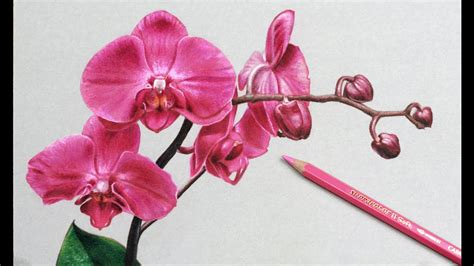 draw flowers orchids drawing youtube
