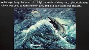Image Gallery sea dinosaurs