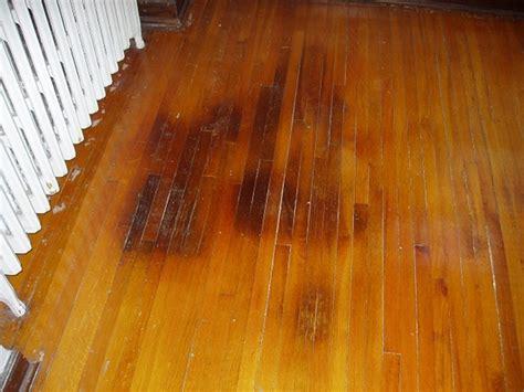 clean cat pee  hardwood floor