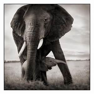Pneumatic Addict : But No Elephants!