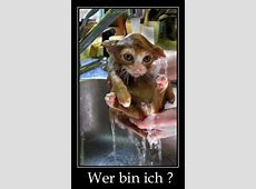 Lustige Bilder mit Tieren, lustige Witze über Tiere und mehr