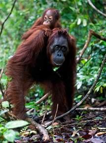 Baby Rainforest Animals