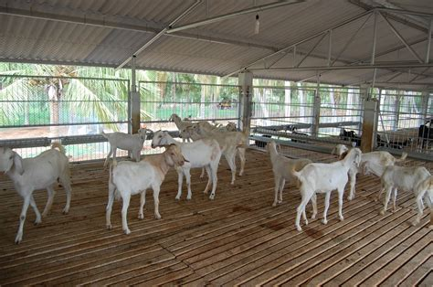 shed floor plan veeravasu goat farm